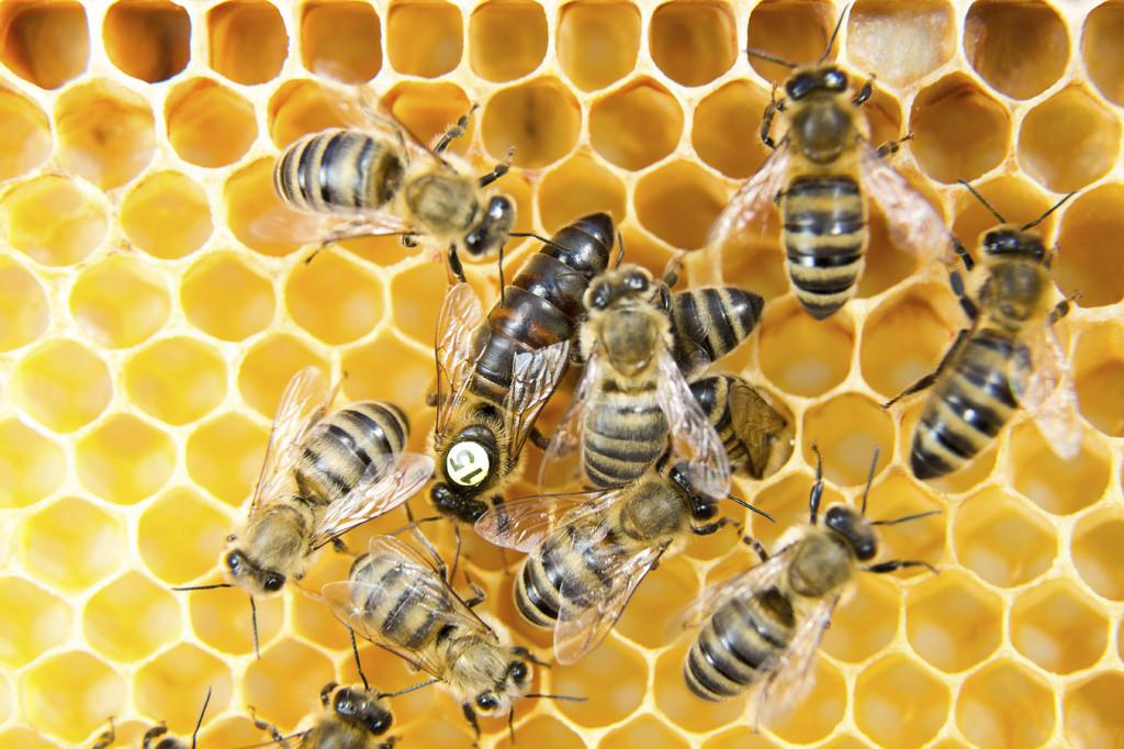 Pszczoła kaput :(